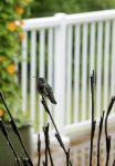 User:Lynne Name:Humming Bird On Lights.jpg Title:Humming Bird On Lights.jpg Views:6 Size:74.40 KB