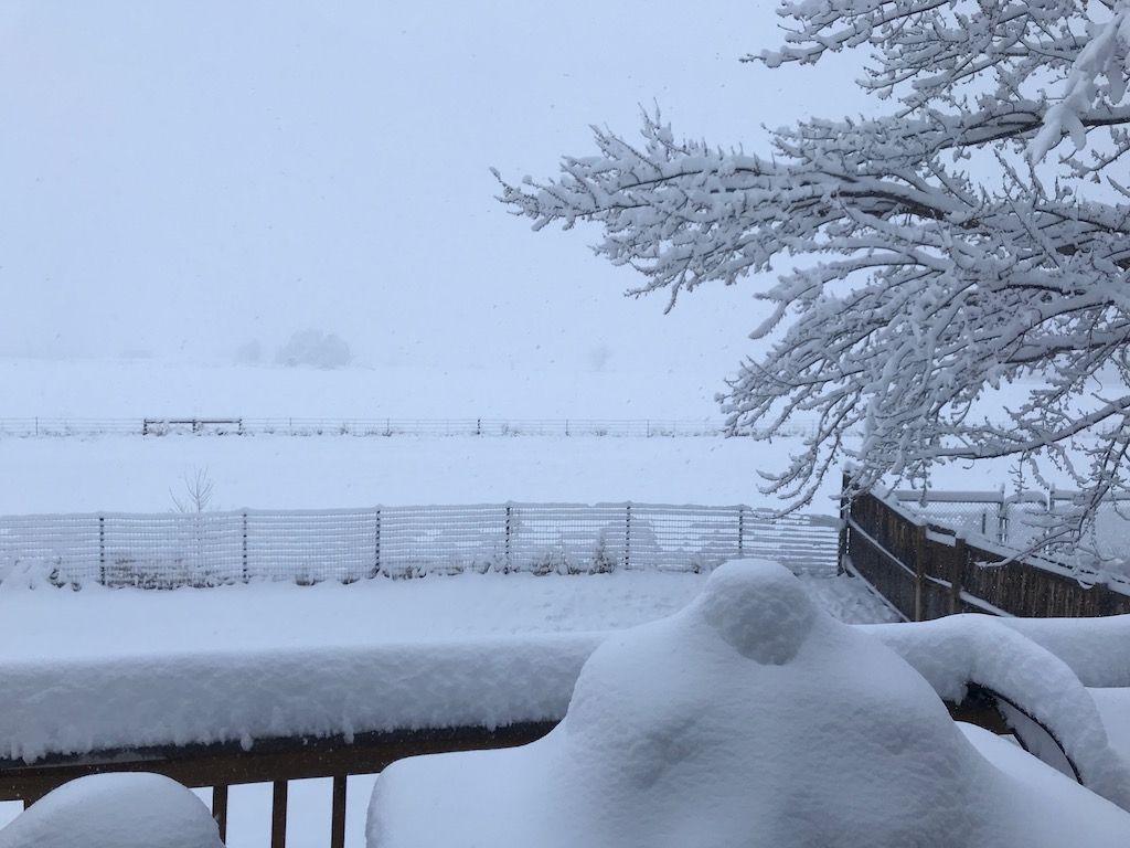 Still snowing.jpg